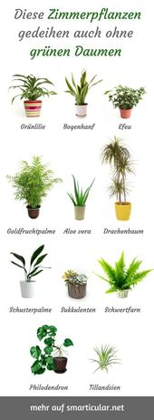For everyone without a green thumb: robust, easy-care houseplants