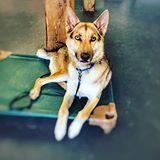 Dog Training Ideas Dogtrainingideas Dog Training Basic Dog