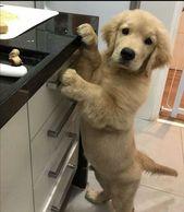 ¿¿Puedo ayudar??…   – Sweet Animals