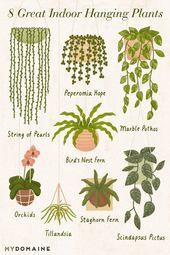 Die 10 besten Zimmerpflanzen, um Ihr Zuhause in einen Dschungel zu verwandeln