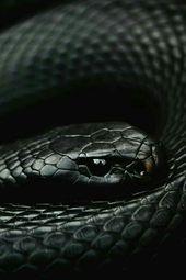 Pin Von Lola Dodge Auf Ch Isabelle Schone Schlangen Schlangen Bilder Amphibien