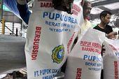Kelangkaan Pupuk Subsidi Di Sejumlah Daerah Pks Sebut Distribusi Tak Tepat Sasaran Di 2020 Pemerintah Penganggaran Tantangan