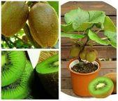 Wie man Kiwi aus Home Seed wächst   – Garten Ideen – #aus #Garten #Home #Ideen … – Beste Fruit Ideen