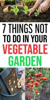 7 Things Not to do in Your vegetable garden