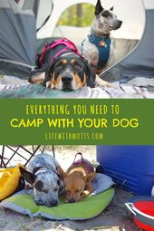 Ultimate Dog Camping Gear List PLUS Printable Checklist #tentideas