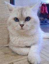230 Gender Neutral Cat Names Cute Cats Cool Cats Cat Names