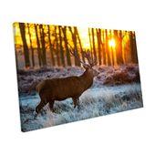 Sonnenuntergang Wild Hirsch Landschaft' Fotografie auf Leinwand Alpen Home Größe: 42 cm H x 62 cm B x T