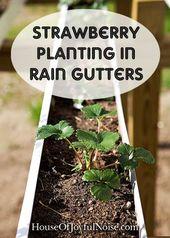 We've had great success growing strawberries in raised garden beds. Now we&#…