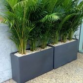 Photo of Troughs  Eco Green Office Plants
