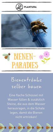 10 Tipps für ein Bienenparadies im eigenen Garten