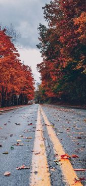 Fall Wallpapers for iPhone  FREE Download Best Autumn Wallpapers