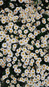 ▷ 1001 + Frühlings-Hintergrundbilder für Ihr H…