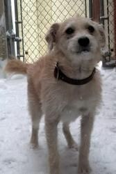 Bingo Is An Adoptable Wirehaired Terrier Dog In Antigo Wi If You Would Like More Information On This Pet Or Would Like T Dog Sounds Terrier Dogs Dog Adoption