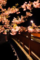 Japanese Beauty 2 By Masato Mukoyama Via 500px Japanese Beauty Blooming Trees Pictures Of Lightning