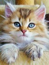 (notitle) – Katzen-Liebe