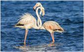 Flamingo Couple Love Birds Wallpaper   flamingo couple love birds wallpaper 1080…