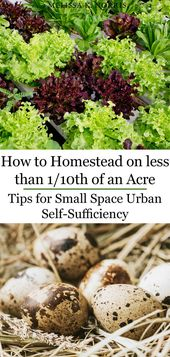 Urban Homesteading – Tips for Small Space Self-Sufficiency