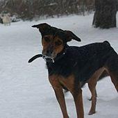 Pin By Megan Gaiger On Rescues German Shepherd Dogs Shepherd