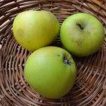 Landsberska Landsberska Jablonie Odmiany Szkolka Ekologiczna Drzew Owocowych Eko Ogrodnik Ekologiczne Gospodarstwo Ogrodniczo Szkolka Fruit Apple Food