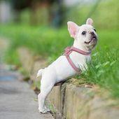 Adjustable Plaid Dog Harness for French Bulldog Puppy   – dog walks.