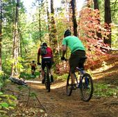 Arnold Rim Trail Mountain Bike Trail In Arnold California