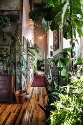 Eine Dschungelwohnung   – wohnung