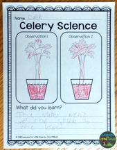 Plants Science Experiments & Teaching How Plants Grow – Lessons for Little Ones by Tina O'Block