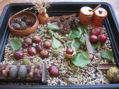 10 Awesome sensory bin ideas for fall–apples, pum…