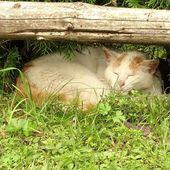 Katzen die Lieblingstiere von …. # Insekten #Garten #Foto #Fotografie #Stadt –