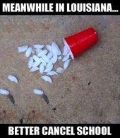 2c399f7508cac0f355059ae787206678 humor meme cajun meanwhile in louisiana better cancel school winter humor meme