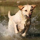 Edmonton Dog Training Dog Training In Edmonton Alberta Canada