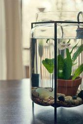 Den Teich ins Zimmer bringen? Ja, mit diesen Wasserpflanzen klappt es! – Pflanzen
