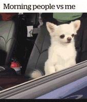 Wie normale Menschen aufstehen / Wie ich aufstehe. | Lustige Bilder, Sprüche, W…