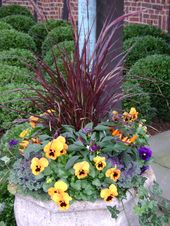 pansies and ornamental kale – Google Search