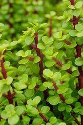 La plante qui absorbait nos émissions de CO2