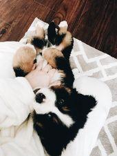 (notitle) – Little puppys