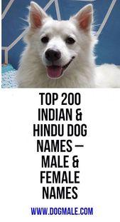 Top 200 Indian Hindu Dog Names Male Female Names Dog Names Dog Names Male Female Names