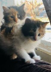 Kittens For Sale In Alsager Cheshire Preloved Cute Cats And