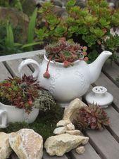 Minigarten mit Sukkulenten (Hauptbild_03)  –  #Hauptbild03 #Minigarten #mit #Suk…  – Garden Decoration