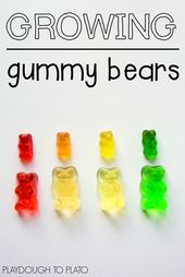 Growing Gummy Bear Science - Playdough To Plato 2