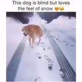 #dog – Videos