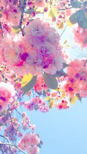 Iphone Wallpaper – Blühende Fotografie von Emily Greenup