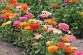 Befolgen Sie diese 5 einfachen Schritte, um genügend Blumen zu züchten, um Ihr Haus mit Blüten zu füllen.   – Garden Ideas