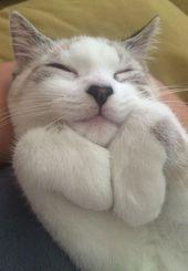 Tippen Sie zweimal auf dieses Foto, um sich Collins I-Katzenpalast anzuschließen. Eine Alleskatzengruppe o …   – CATS