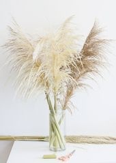Pack of 25 – Fresh Natural Pampas Grass – Ships Alone