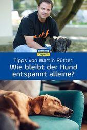 Martin Rütter en vivo en ANTENNA BAYERN: las respuestas para escuchar   – Hunde