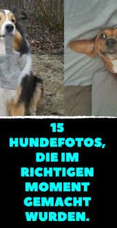 15 dog photos taken at the right moment …