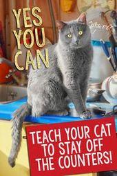Ja, Sie können Ihrer Katze beibringen, sich von der Theke fernzuhalten!