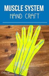 Muscular System Hand Craft