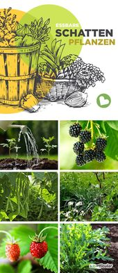 Edible plants that grow in the shade